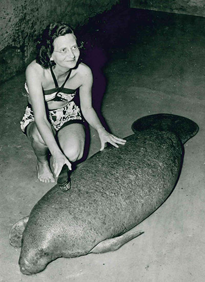 oldest-manatee-getting-cleaned-up-1959_tcm25-447816