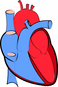 yapay kalp