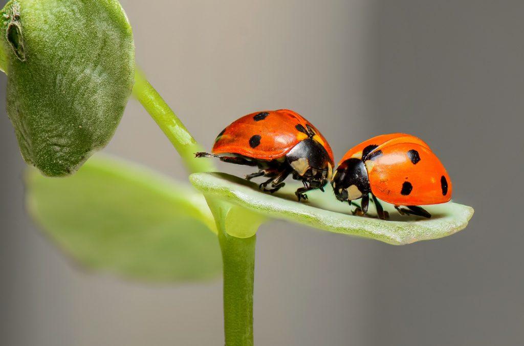 Doğada Aşk Var!