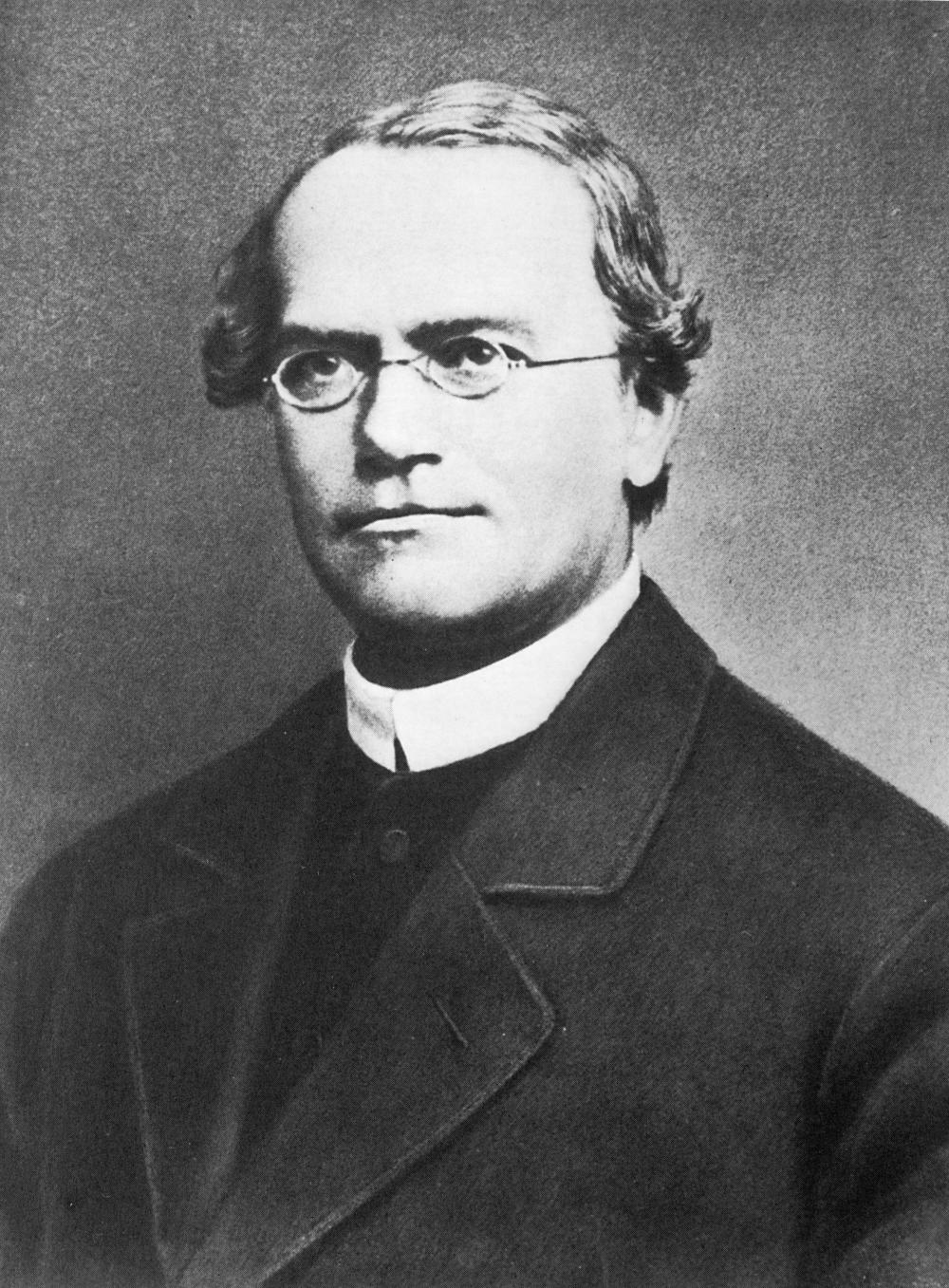 Gregor Mednel