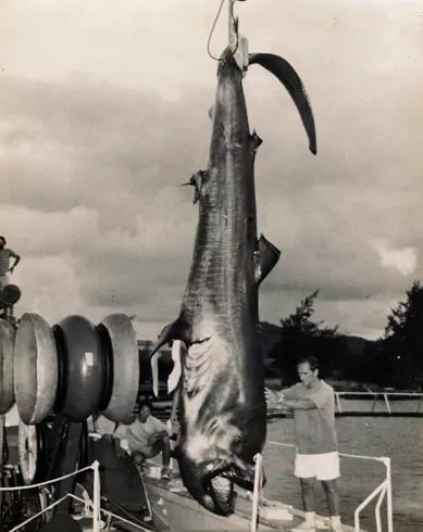 dev ağızlı köpekbalığı