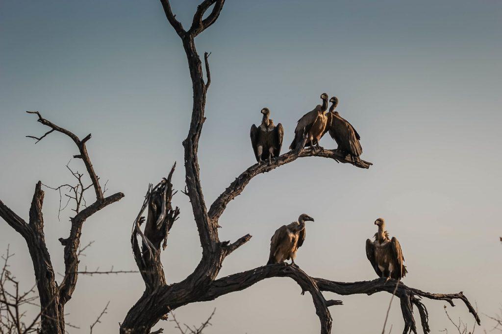 Akbabalar
