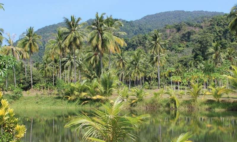 Amazon göllerinde karbonun ana yayıcısı mikroorganizmalar