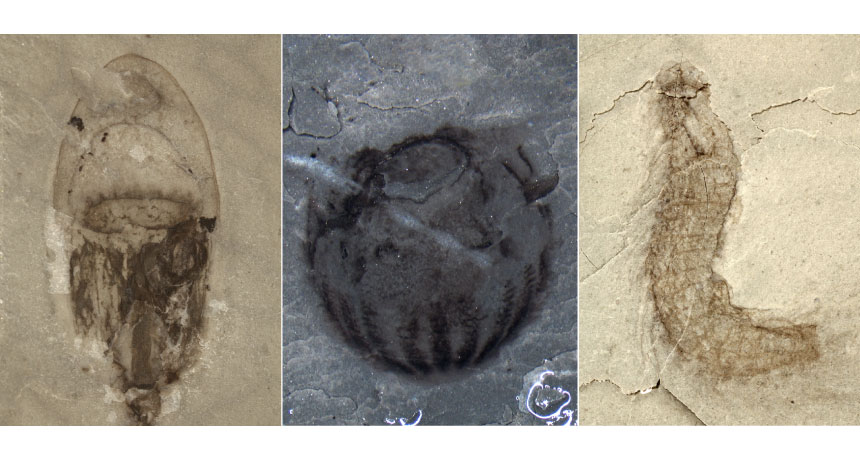 Kambriyen Dönemi Çin'de bulunan deniz canlıları