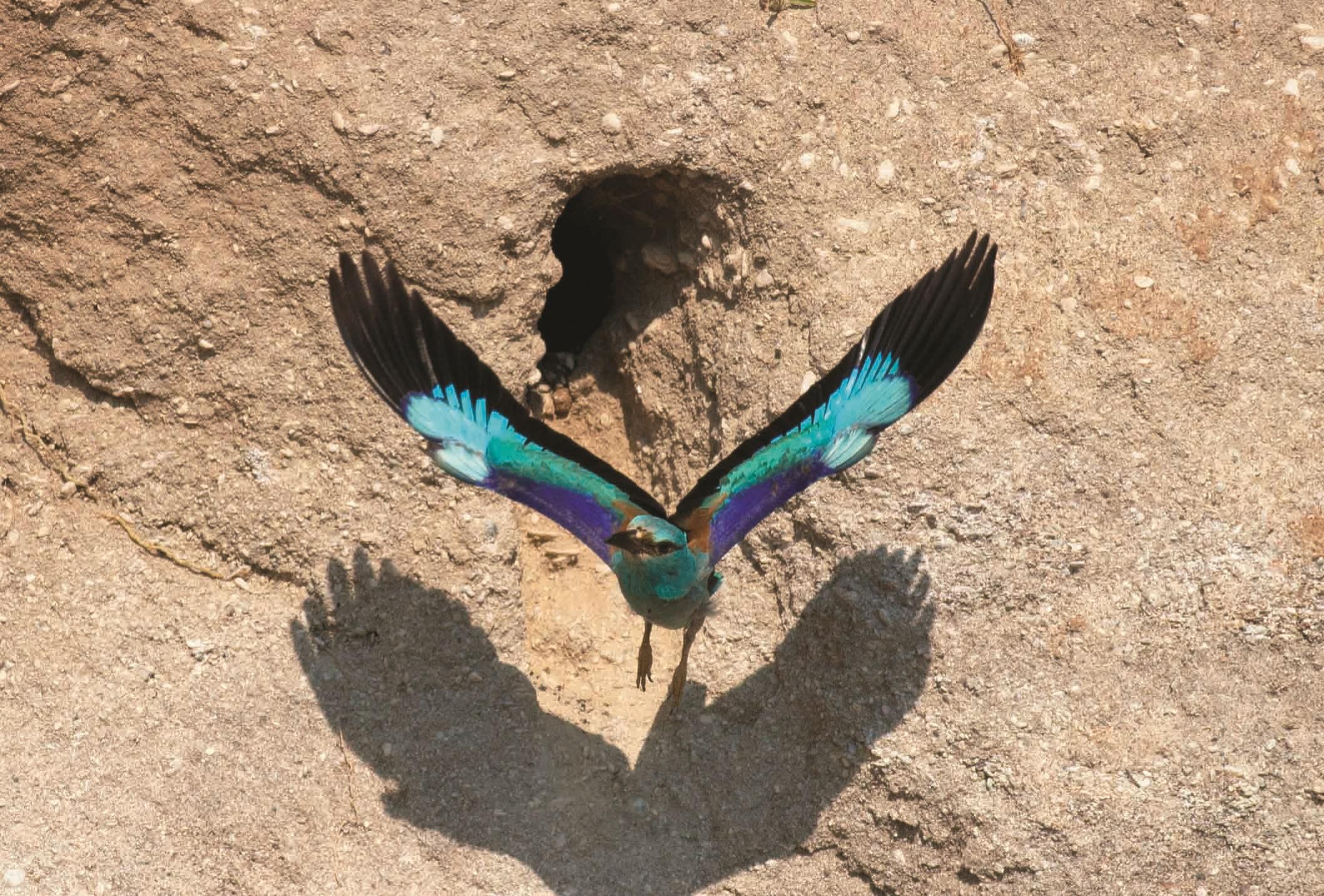 Türkiye Üreyen Kuş Atlası