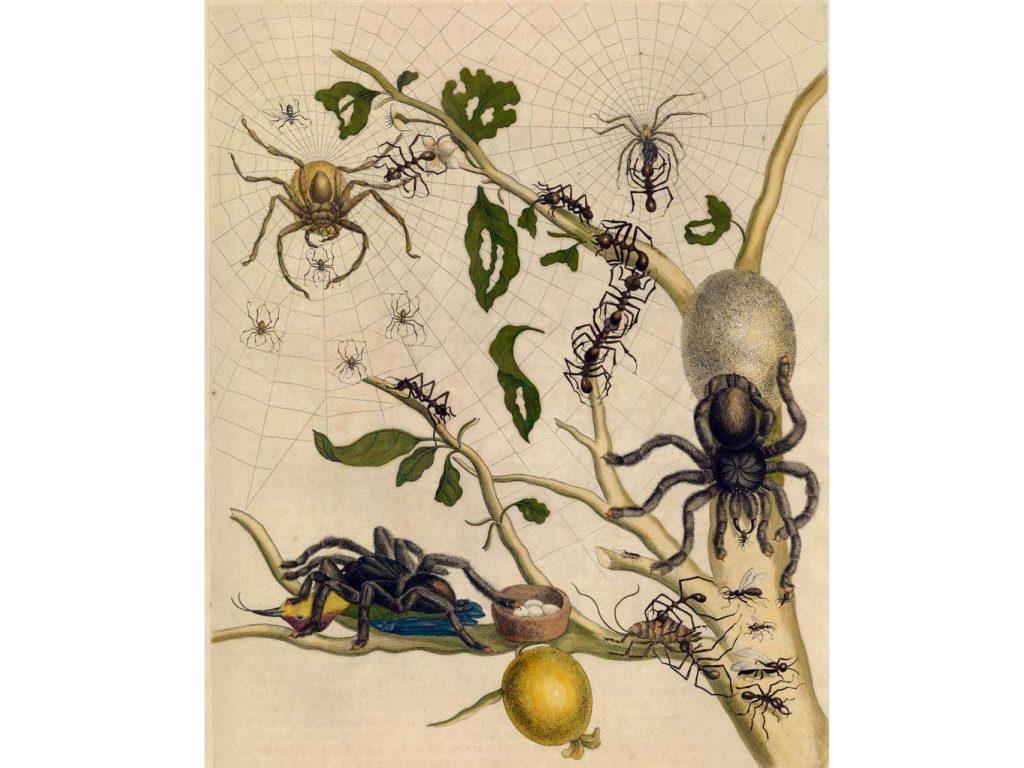 Tarantula çizimleri