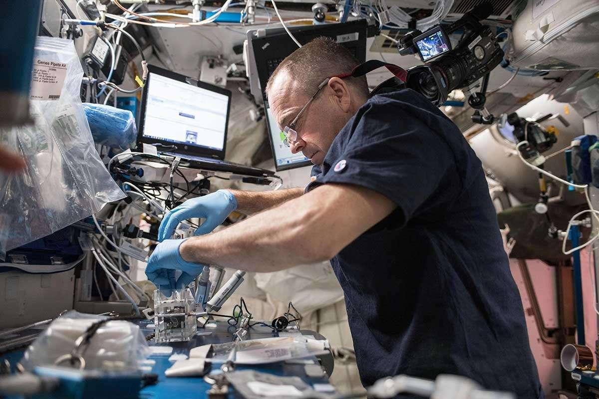 Uluslararası Uzay İstasyonu bakteri ve mantar kataloğu