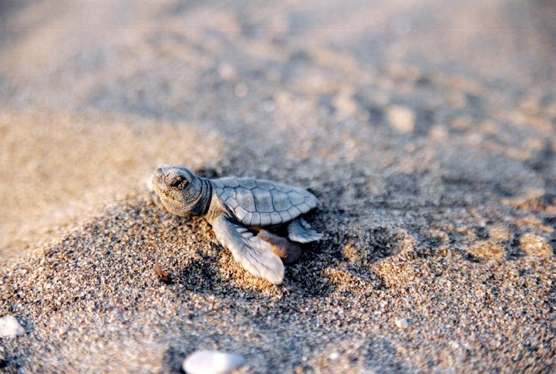 deniz kaplumbağaları ekad