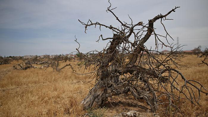 bir milyon tür iklim değişikliği sebebiyle yok olabilir