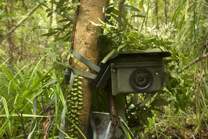 Borneo ormanı çekimi