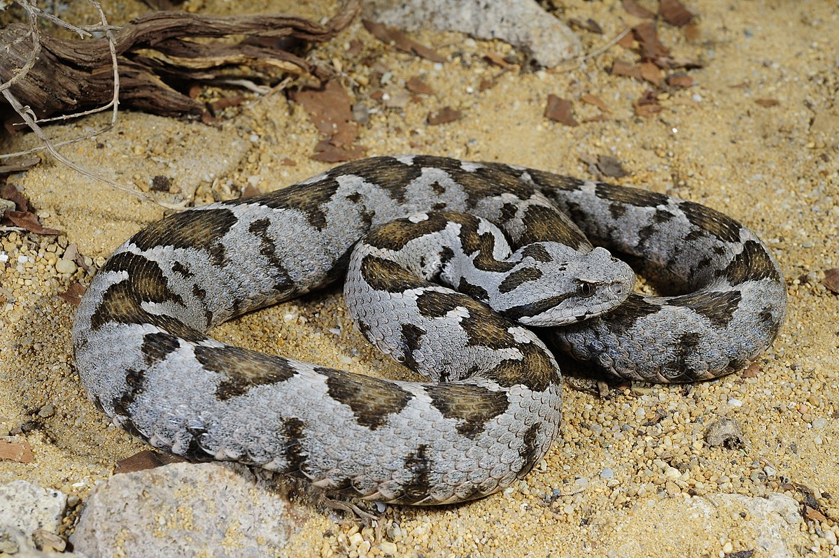 yılan ısırılmalarından nasıl korunuruz