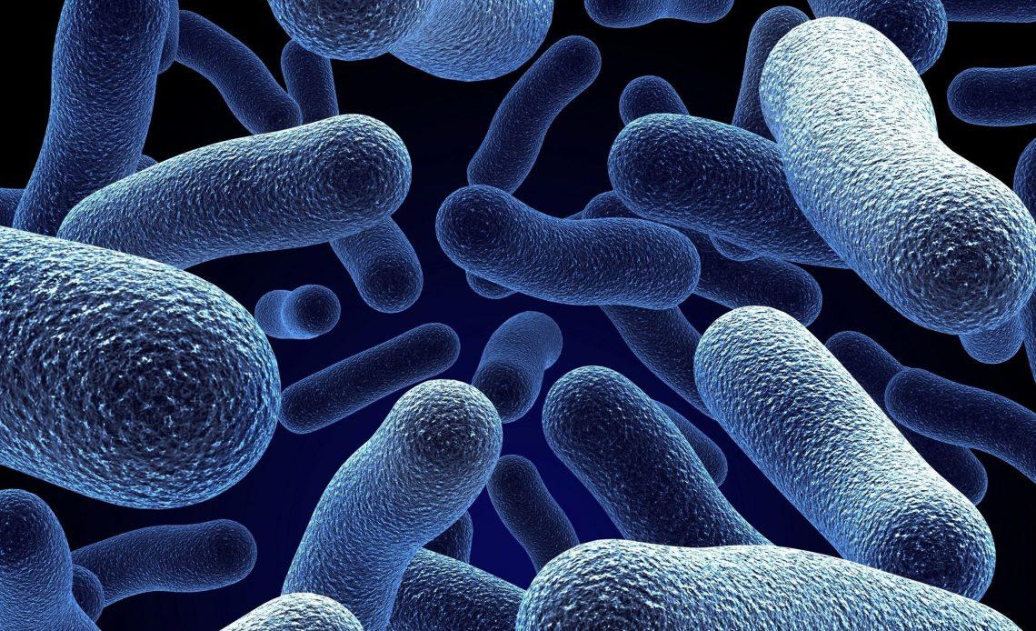 mikroorganizmalar