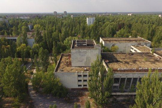 Çernobil vahşi yaşam habitatı
