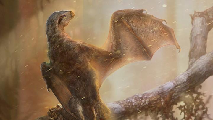 yarasa kanatlı dinozor fosili bulundu