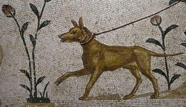 ilk köpekler ve insanlar arasındaki ilişki. köpeklerde spondiloz deformansı