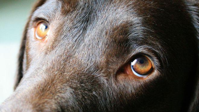 köpeklerin gözlerindeki ifade