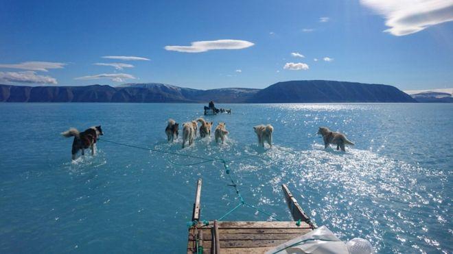 su üstünde yürüyen köpekler ve Grönland'da eriyen buzullar