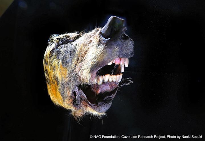 dev kurt fosili kafatası