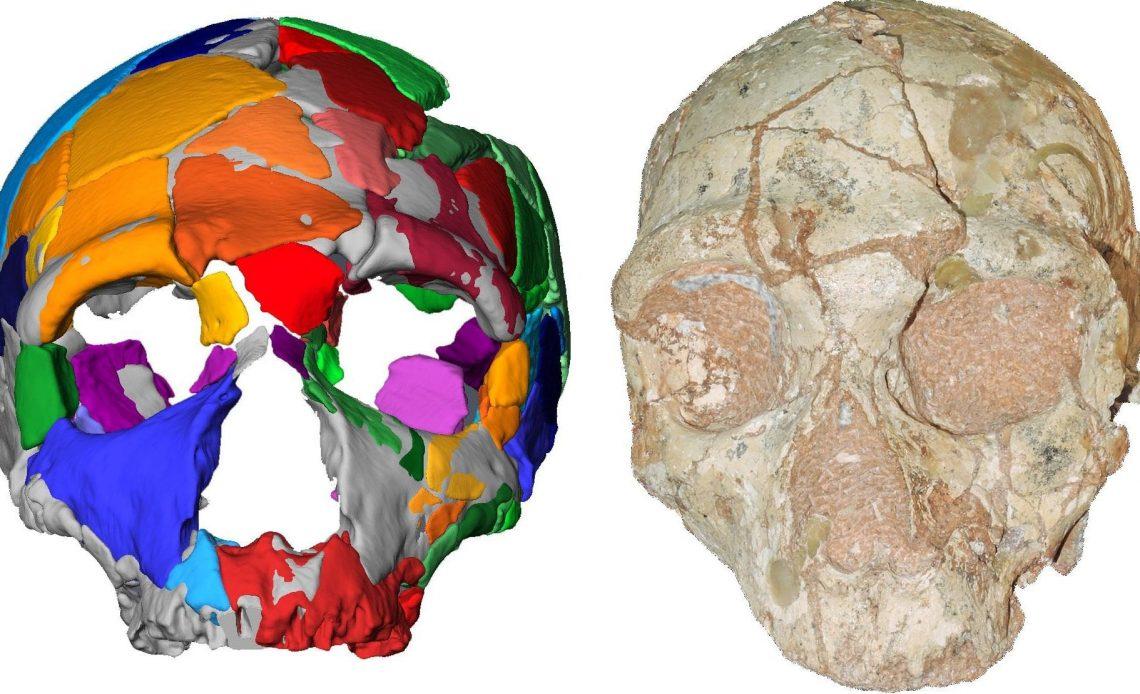 sapiens kafatası