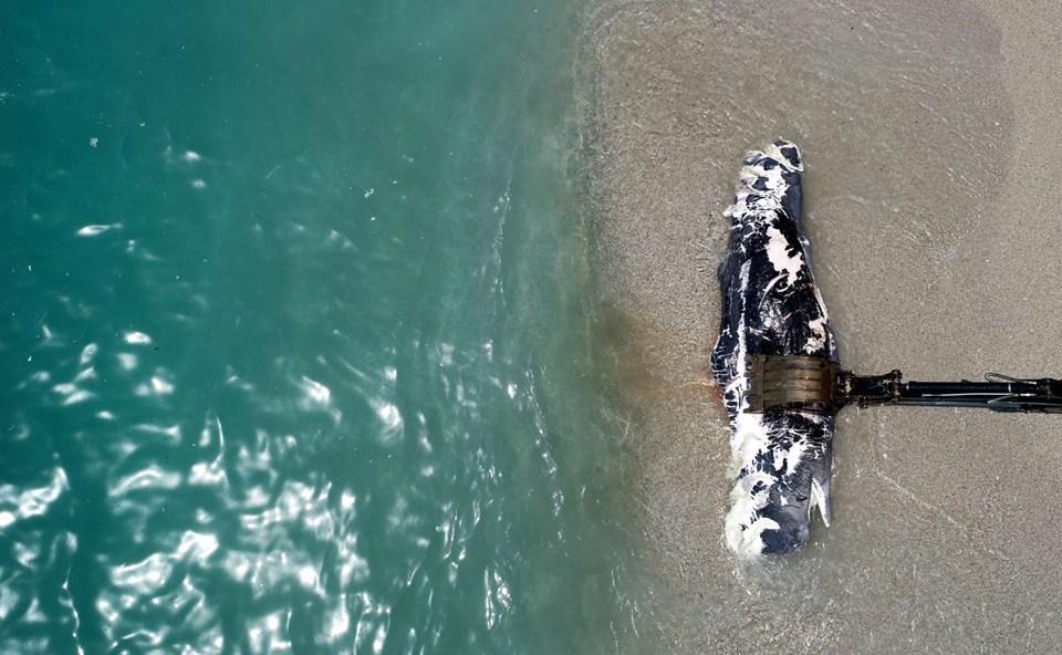 Ölüdeniz'de bir balina kıyıya vurdu