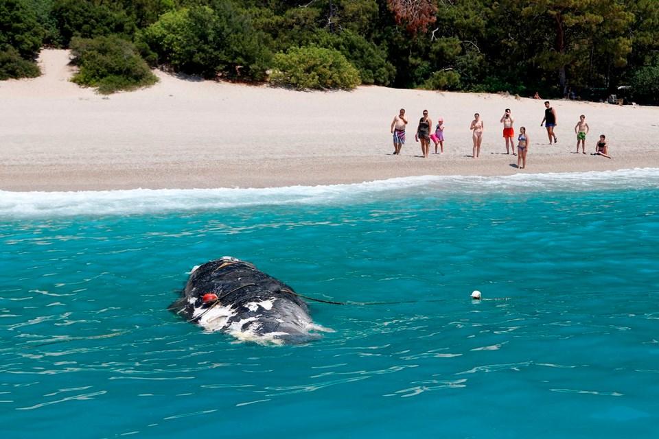 Ölüdeniz balina kıyıya vurdu
