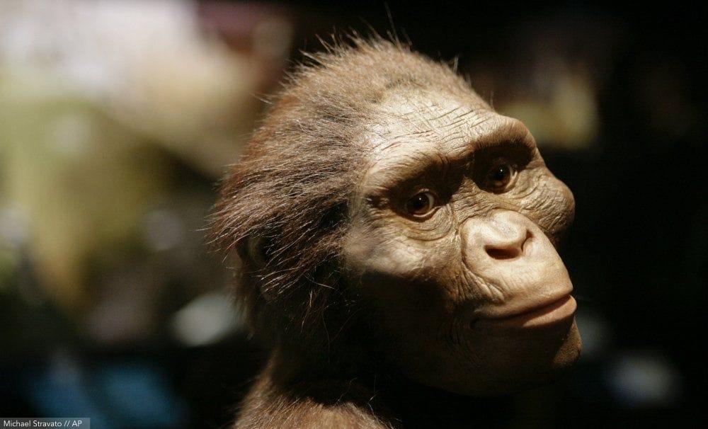 İnsansı türü Australopithecusafricanus