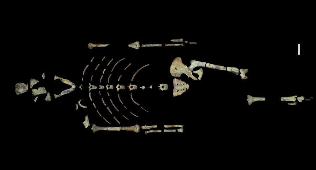Lucy'nin fosilini oluşturan kemikler