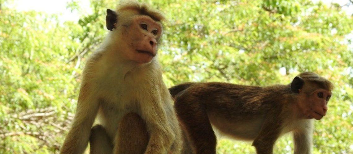 ekoloji ve evrimsel biyoloji