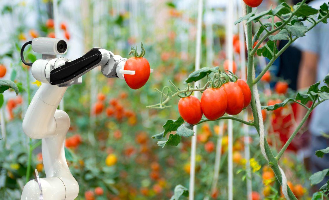 tarım yapay zeka