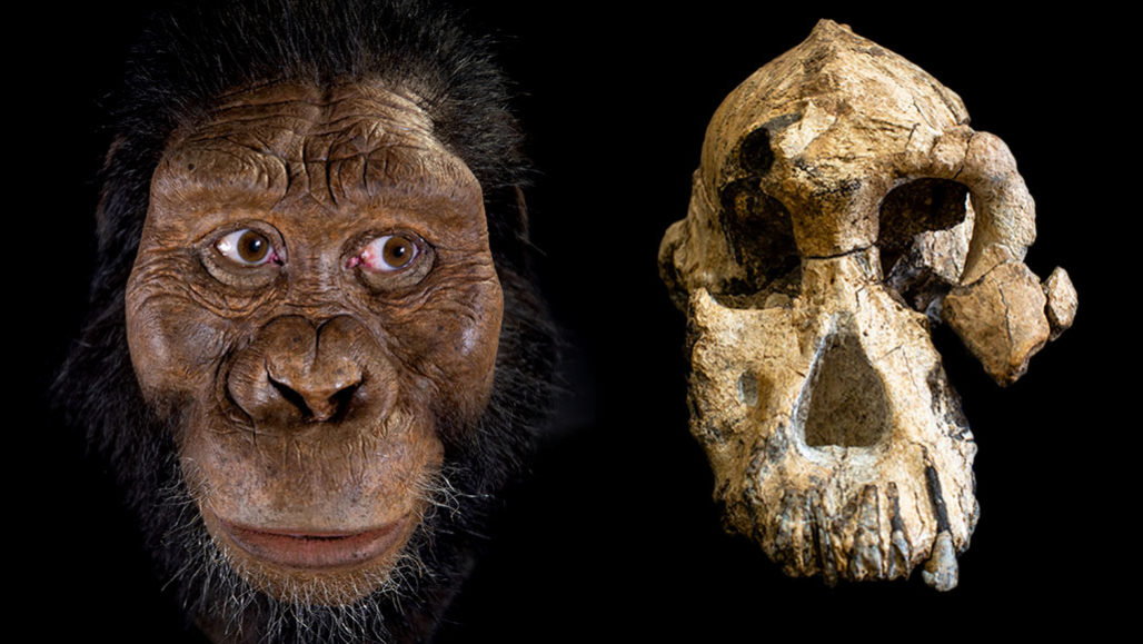 İnsansı fosili