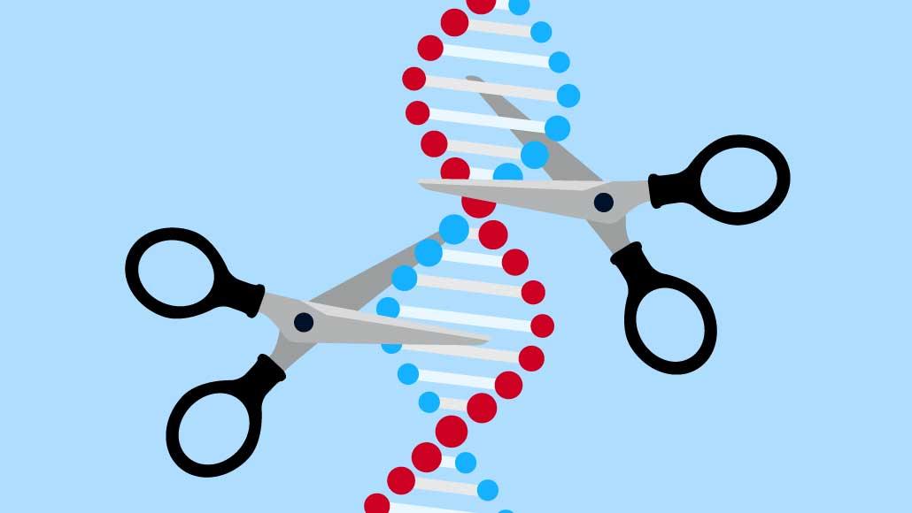 CRISPR kalıtsal genom düzenleme