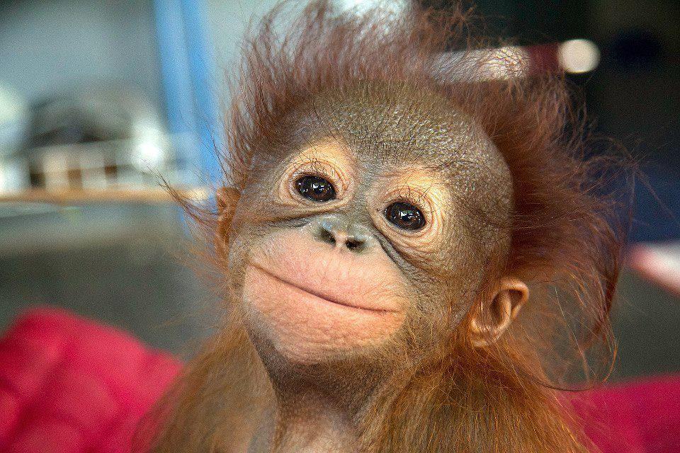 maymunlar insanlardan daha mutlu