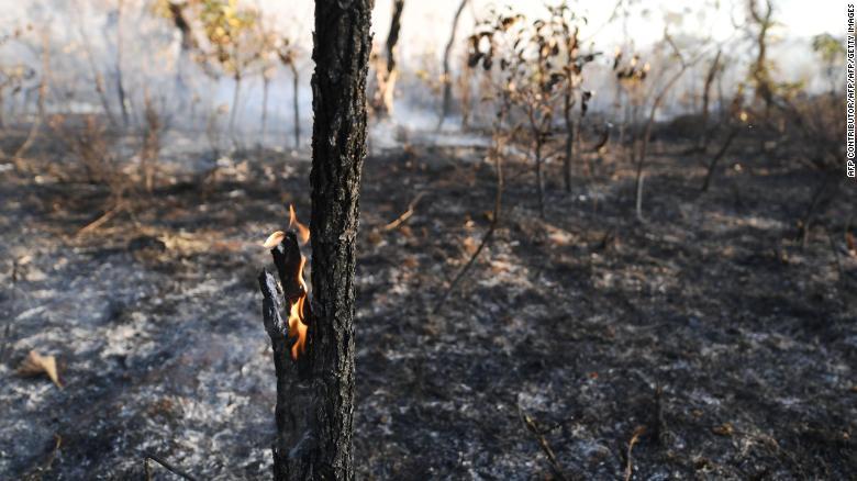 Amazon yangınları