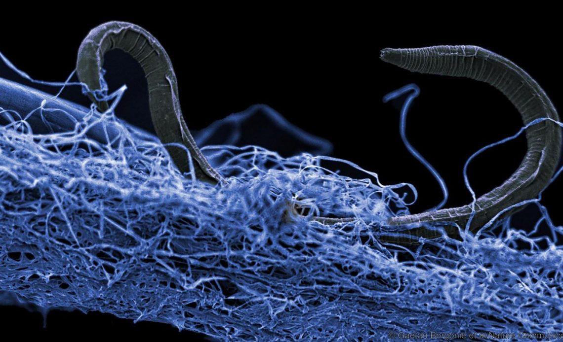 mikrobiyal yaşam