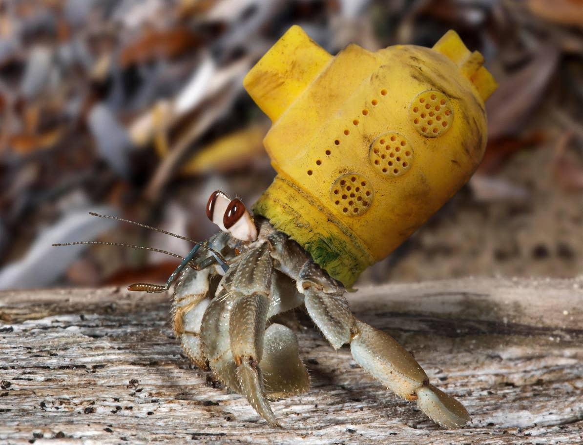 plastik atıkların hayvanlara zararları