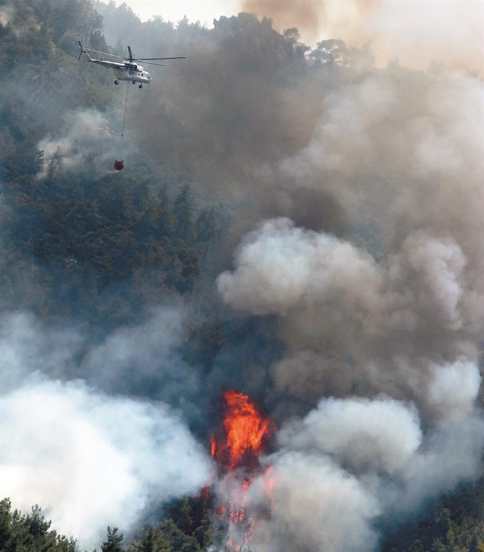 orman yangınları sonrası ormanlaştırma