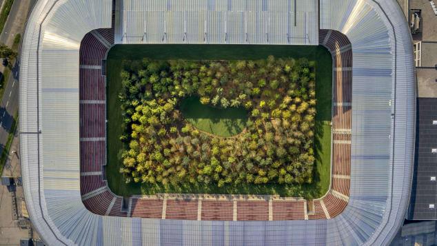 orman stadyum