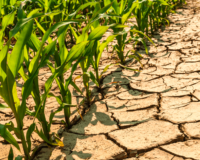 kayıp mahsul tohumları