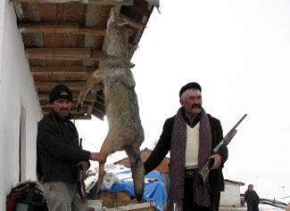 kurt avı