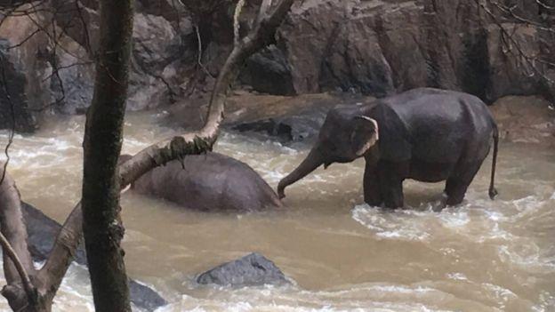 Tayland'da filler öldü