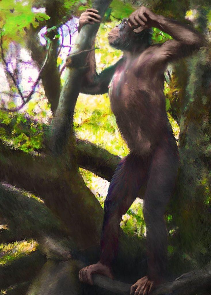 iki ayaklarının üzerinde durabilen maymun
