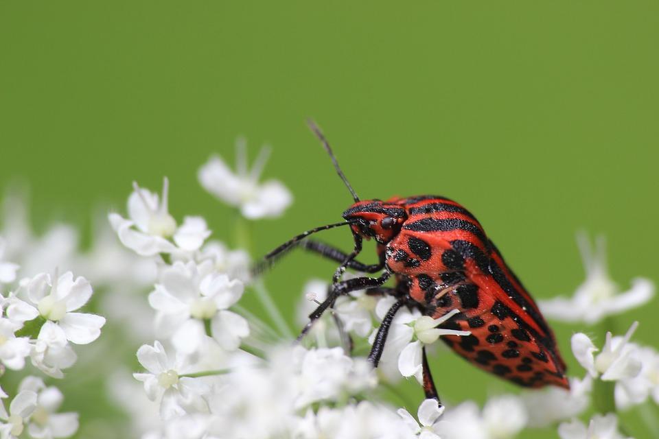 böcek sayısı ve türlerinde düşüş