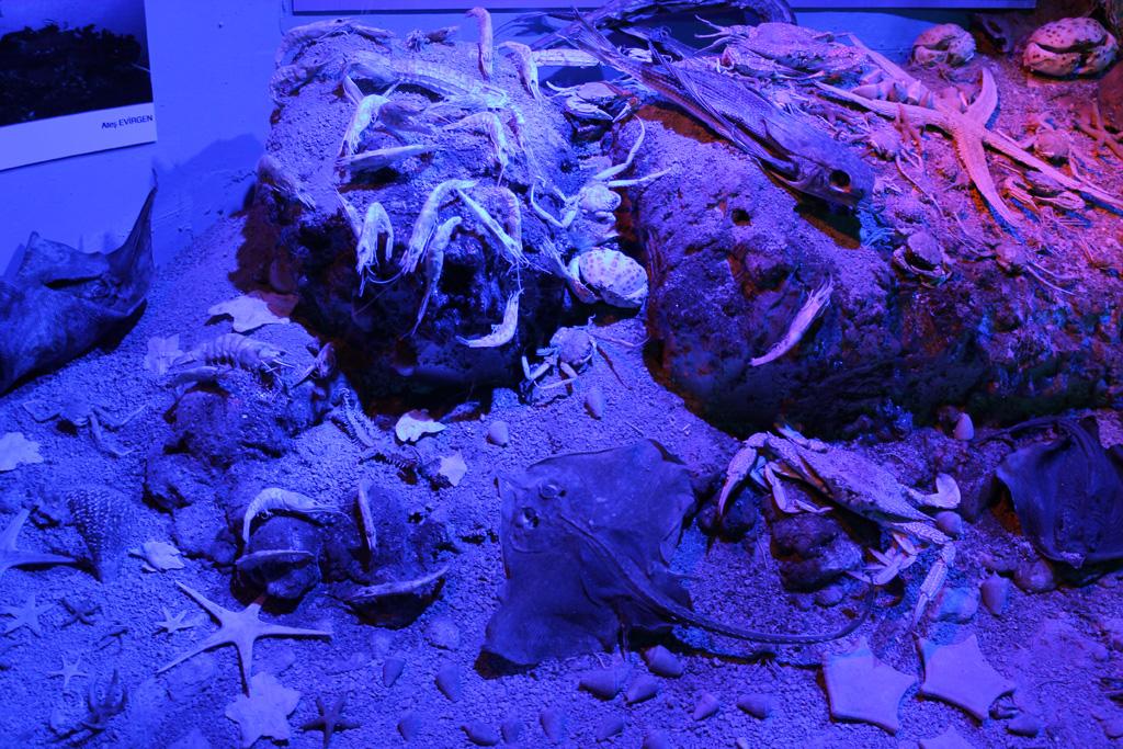Antalya deniz biyolojisi müzesi