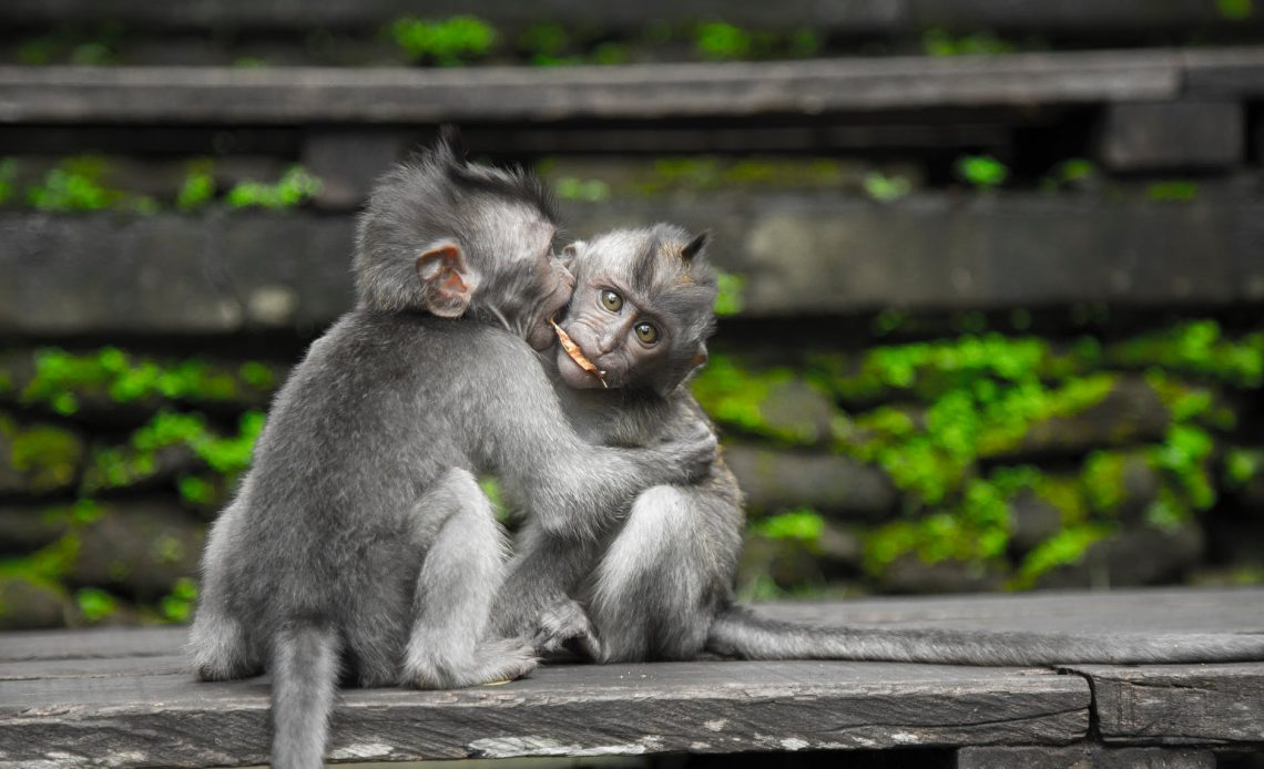 hayvanlarda eşcinsel eğilimler
