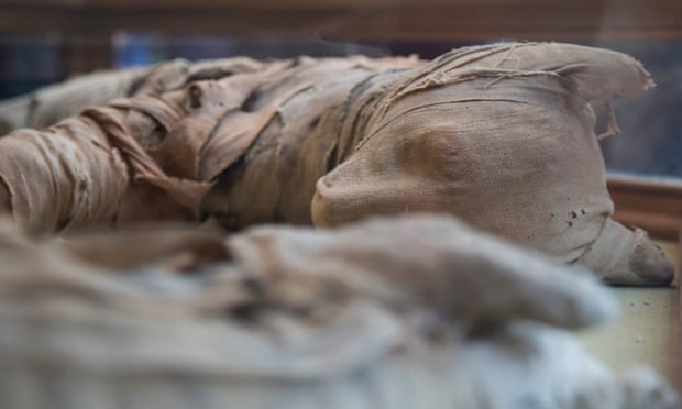 Mısır'da mumyalanmış büyük kediler bulundu