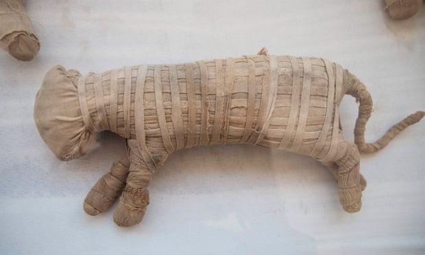 Mısır'da bulunan mumya aslanlar