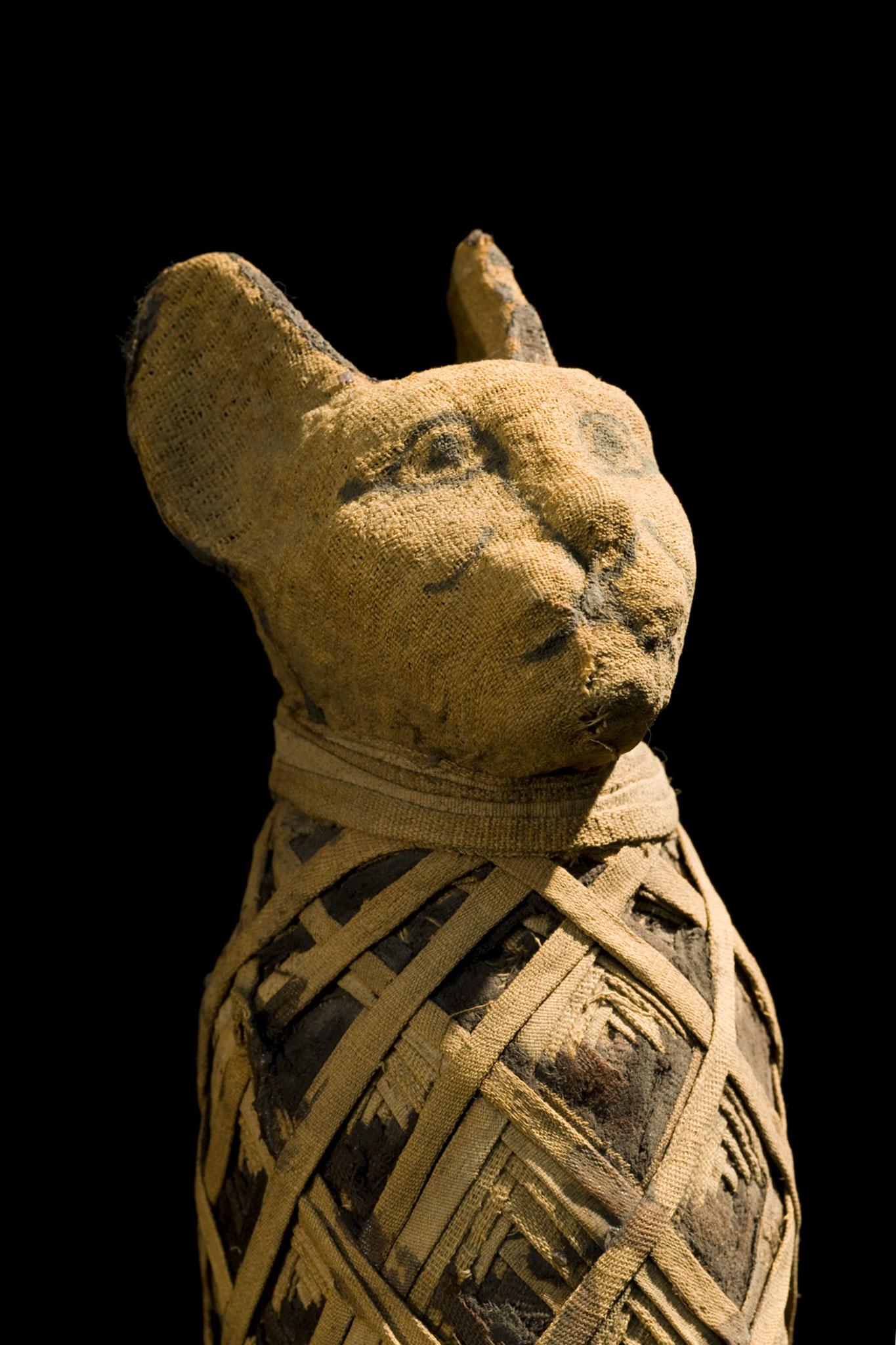 kedilerin evcilleştirilmesi antik kediler