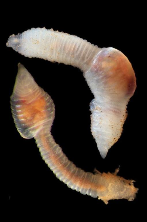 derin denizlerdeki türler