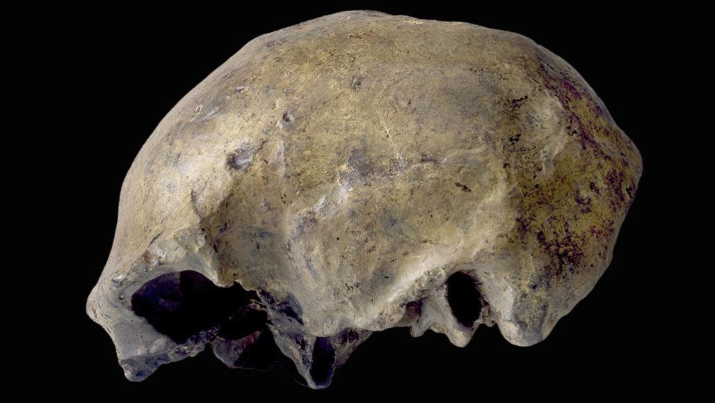 homo erectus en son ne zamana kadar yaşadı