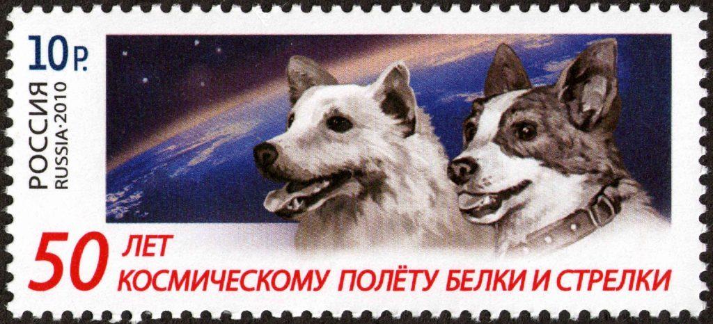 uzay köpekleri
